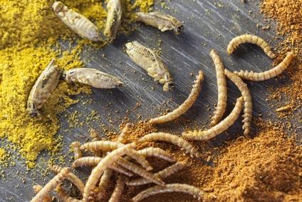 Comer Insectos como Fuentes Alternativas de Proteína