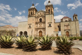 Santo Domingo cathedral behind agave palnts in Oaxaca,Mexico